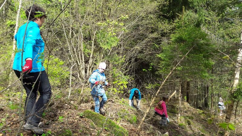 Waldräumen 2